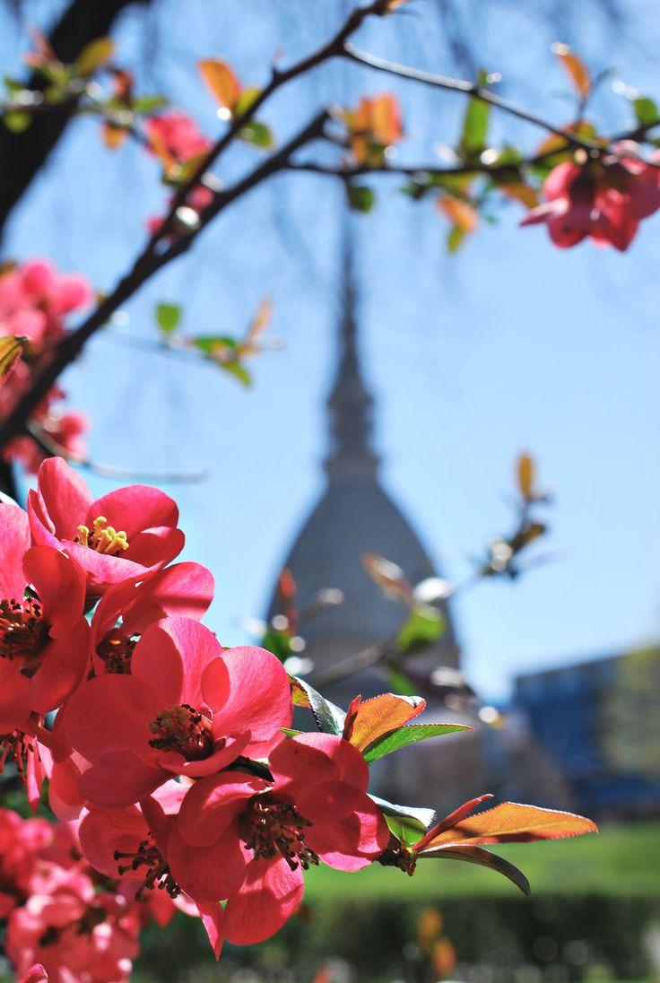 Torino in Primavera  2013 © Enrica Conte