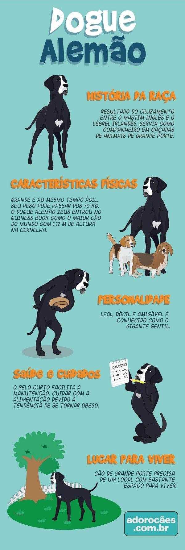 Dogue alemão: história da raça, características físicas, personalidade, temperamento, saúde e cuidados, lugar para viver