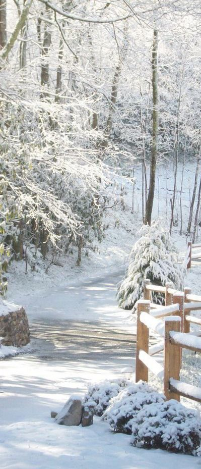 winter.quenalbertini: So winter.. so beautiful...