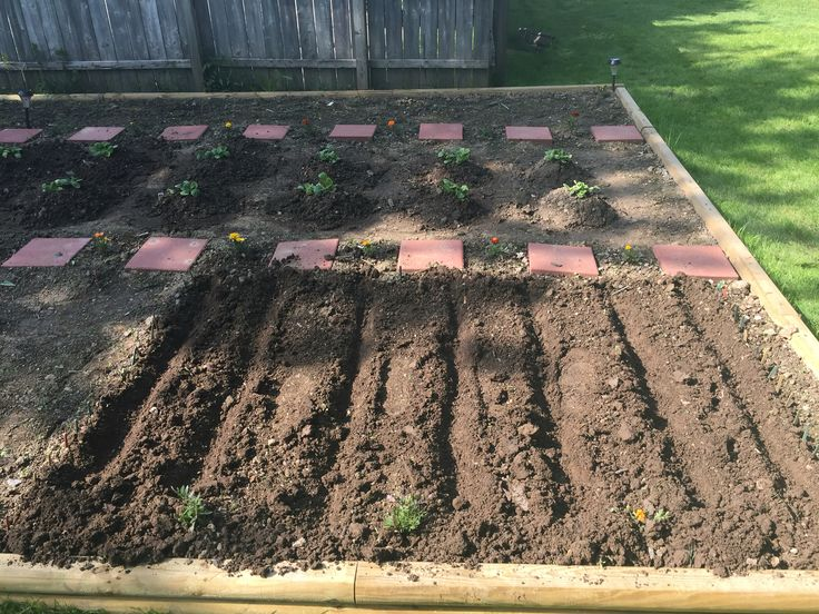 Rows for green beans.