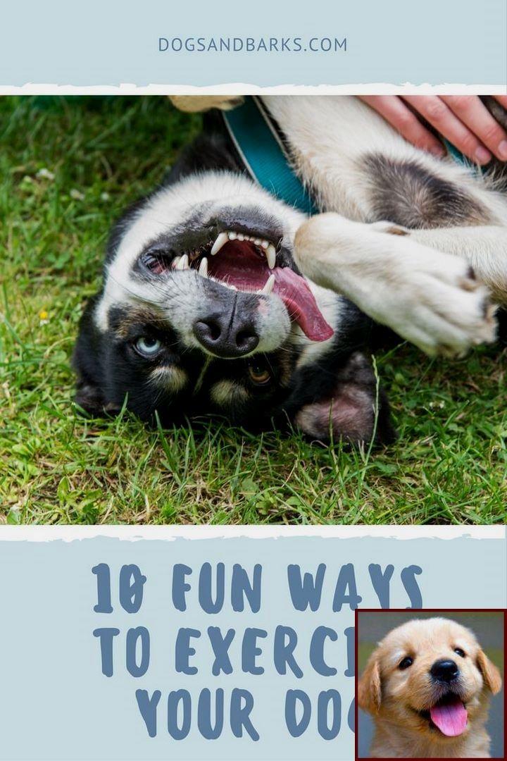 1 Have Dog Behavior Problems Learn About Dog Behavior Myths And