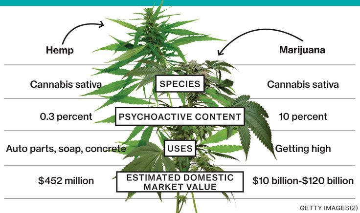 Hanf vs Marihuana