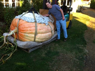 how to grow huge pumpkins