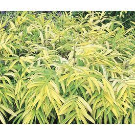 17.95 Tray Golden Bamboo (Lw03322) Nursery