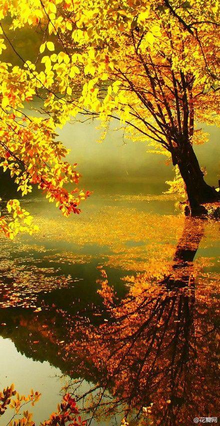 """""""Si c'est de l'or qu'il nous faut pour recouvrir la terre, je préfère demander à l'automne de s'en charger..."""""""