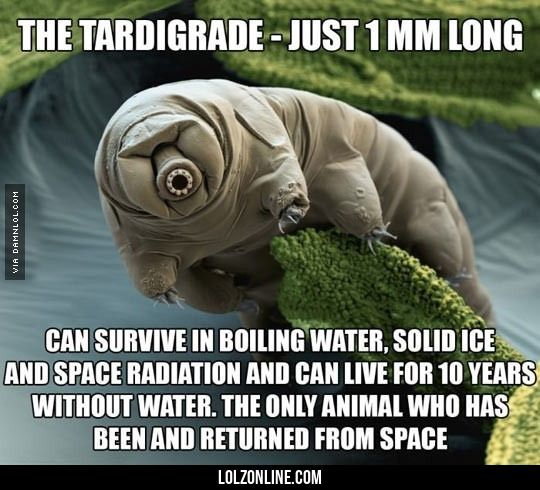 Meet The Strange Tardigrade#funny #lol #lolzonline