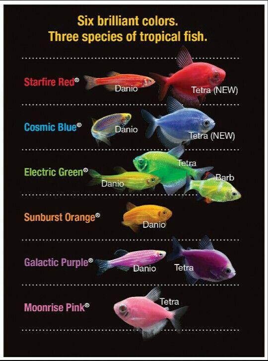 how to buy fish for aquarium ff14
