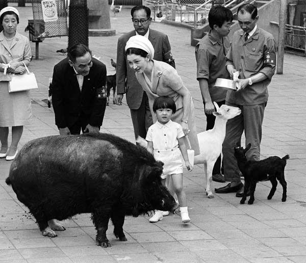 子ども動物園でタヒチ産ブタと遊ばれる礼宮さま(東京都台東区・上野動物園)(1969年07月撮影)