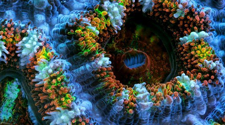 SLOW LIFE, explorez la beauté époustouflante des récifs coralliens qui regorgent de vie et de couleurs