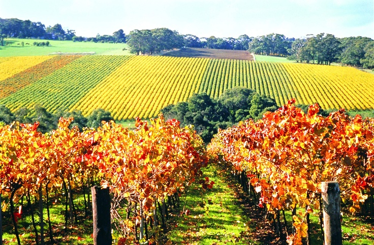 Sip, sniff, and savour fine wines within the hallowed walls of historic Victorian viticultural institutions, or discover secret winery gems. Yarra Valley Wines await your arrival! #CoxandKings