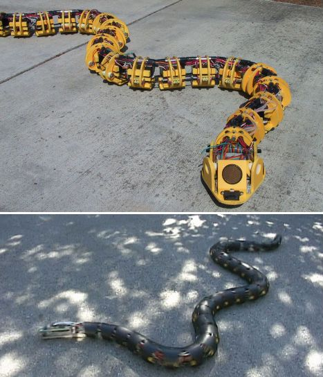 Incredibly Lifelike Robot Snakes.  Cool snake robots like this one, built by Dr. Gavin Miller, are not just being developed for fun – they could eventually be used to disable explosives. Miller's series of robotic snakes move in a way that's stunningly similar to real snakes; his latest prototype is equipped with motion and range sensors.