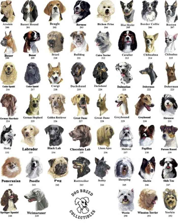 Pictures Of Dog Breeds In Alphabetical Order