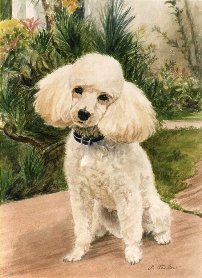 Poodle In Garden Painting  - Poodle In Garden Fine Art Print