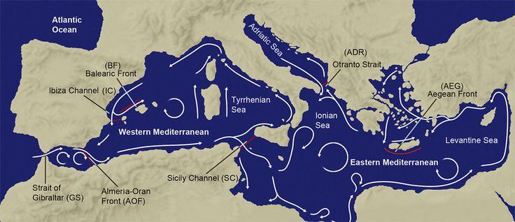 Analizan las barreras al flujo de genes entre especies marinas en el Mediterráneo