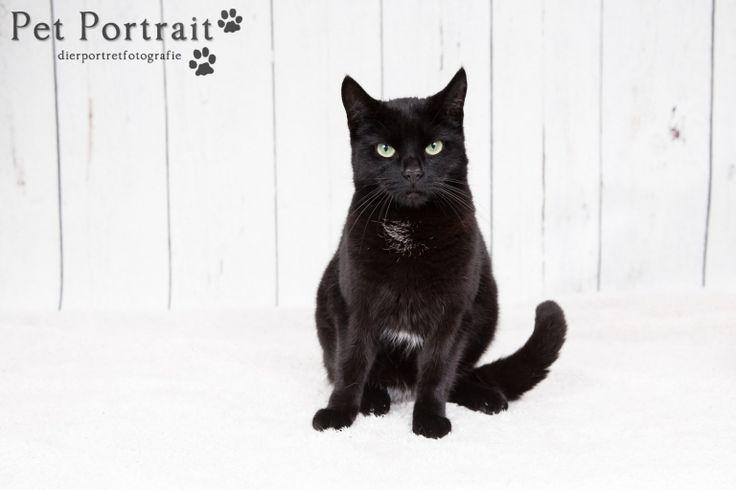 Kattenfotografie Oude Wetering - Fotoshoot voor twee katten-8