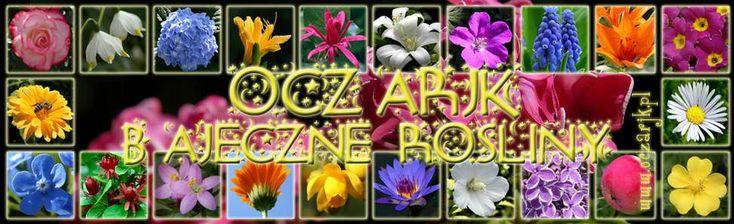 porady na temat cięcia, sadzenia i pielęgnacji roż