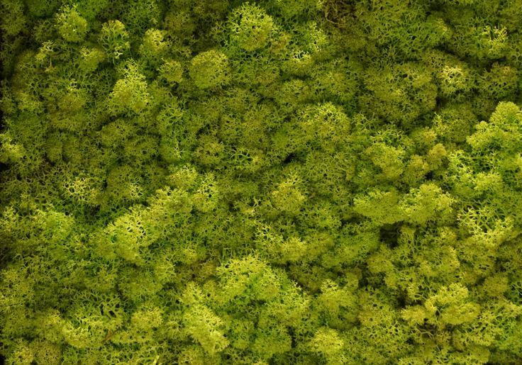 Torvtak icemoss spring green. Een Torvtak spring green mospaneel of moswand van Nature at home is een prachtige, onderhoudsvriendelijke decoratieve en natuurlijke blikvanger in elk interieur. Bovendien heeft mos een sterke geluiddempende werking.