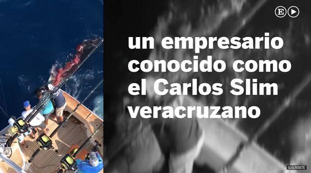 El hijo de un empresario y otros 6 hombres matan a balazos a un tiburón tigre en Veracruz - http://www.esnoticiaveracruz.com/el-hijo-de-un-empresario-y-otros-6-hombres-matan-a-balazos-a-un-tiburon-tigre-en-veracruz/