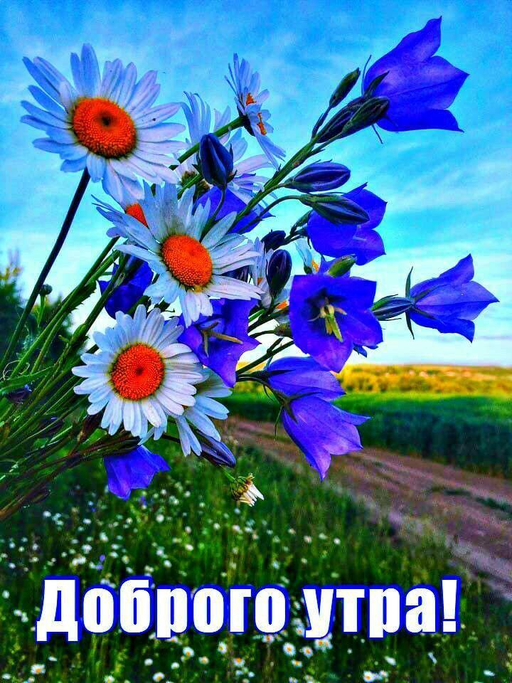 Доброе утро полевые цветы картинки с надписями