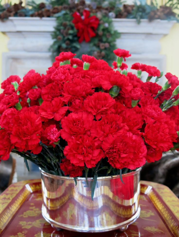 Best ideas about red carnation on pinterest