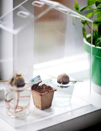 Una serra in casa per coltivare un piccolo orto - IKEA