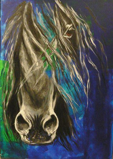 Ilusionado cheval espagnol au Haras du Grand ORme par Sabine BESSO
