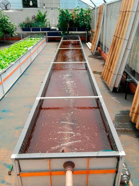 25 melhores ideias sobre tanques de piscicultura no for Construccion de estanques para piscicultura