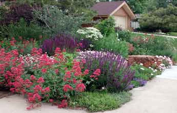 18 best and the desert shall blossom images on for Zero landscape ideas