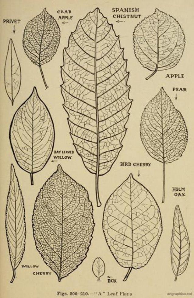 How To Draw Tree Leaves Tree Tree Leaves Leaf Drawing Tree Drawing Flower Drawing