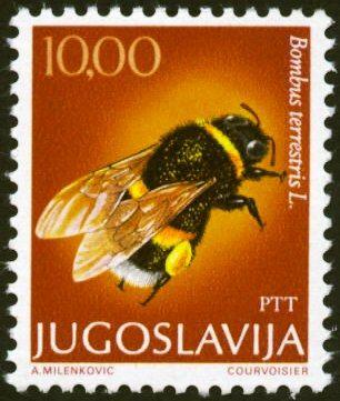 bumble bee from Yugoslavia!