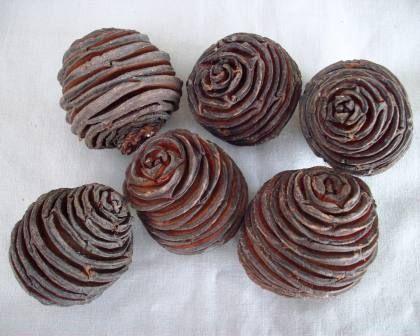 Platyspermum cones