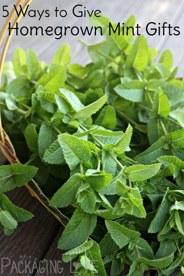 Make the most of the ever abundant herbs by making homegrown mint gifts now and have them ready for gift giving later on.