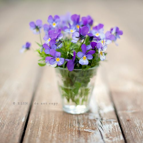 Sweet posy of freshly picked violets.