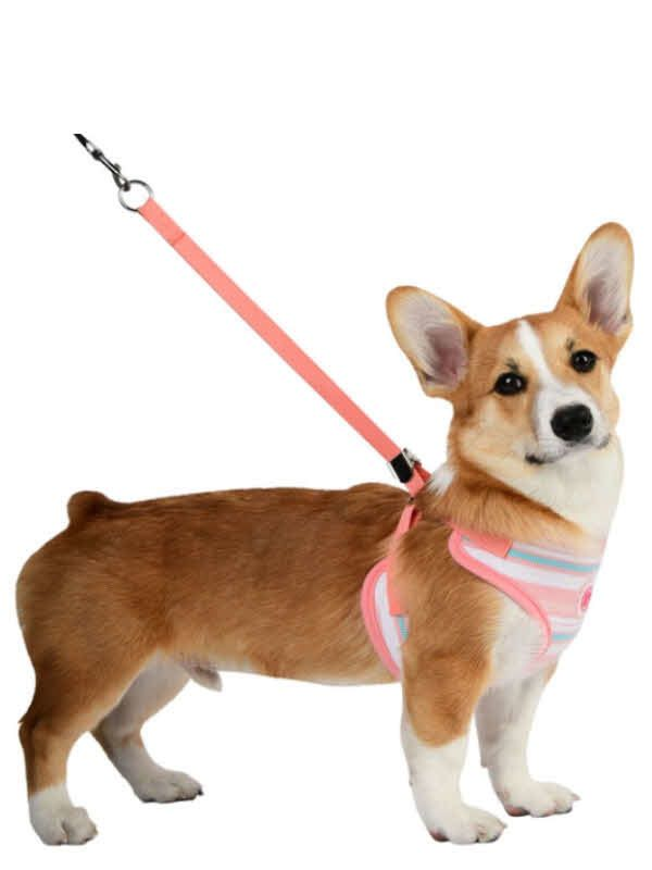 Cara Dog Comfort Harness By Pinkaholic Pink Dogharness Pricecopets