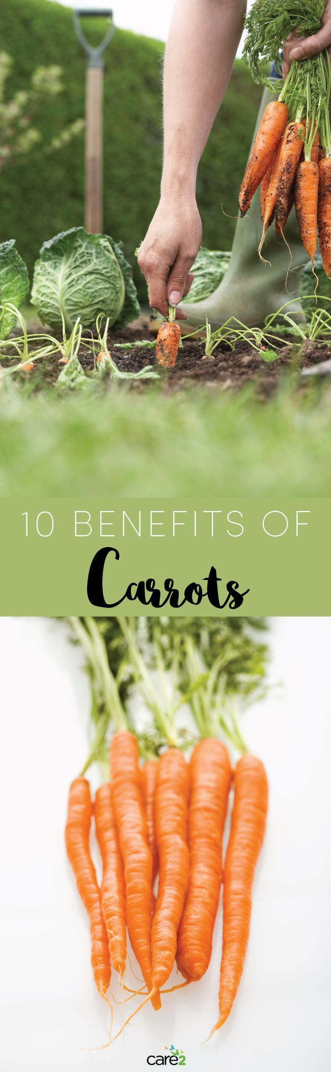 10 Benefits of Carrots: The Crunchy Powerfood - http://nifyhealth.com/10-benefits-of-carrots-the-crunchy-powerfood/
