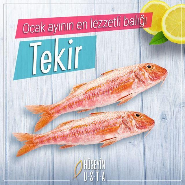 Rakı - Balık / January