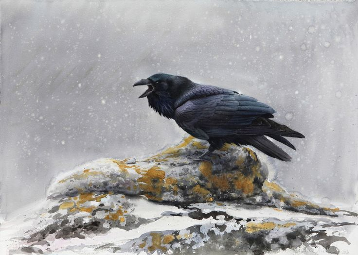 Cry From the Darkness (Raven) - Lars Jonsson - watercolor