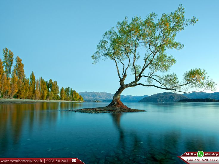 Lake Wanaka - Lake in Queenstown, New Zealand   |   Lake Wanaka is located in the Otago region of New Zealand, at an altitude of 300 metres.   | Source : https://en.wikipedia.org/wiki/Lake_Wanaka  |   Visit : http://www.travelcenteruk.co.uk/cheap-flights-to-queenstown.php  | ☎ Call us 0203 811 2447  | 📱 Add Now WhatsApp +44 778 620 7772  |  #lakewanaka #queenstown #newzealand #besttravelagentsinuk  #travelcenter  #cheapflights