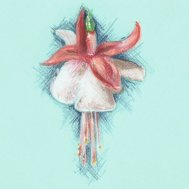 A beautiful Fuchsia illustration from our SS16 Lookbook by our Lucy from the studio  #BillSkinner #Fuchsia #illustration #fuchsiaillusion #sketch #artistsoninstagram