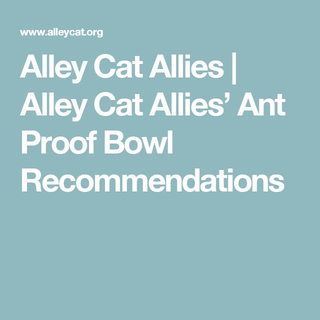 Alley Cat Allies | Alley Cat Allies' Ant Proof Bowl Recommendations