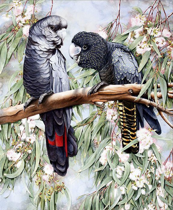 Black Cockatoos Heidi Willis: Watercolour 53 x 69cm / 21x27inch