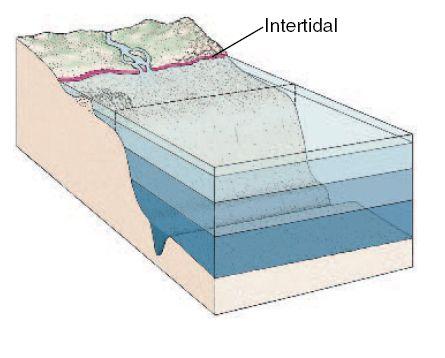 daerah bagian pantai yang terletak antara batas surut terendah dan pasang tertinggi