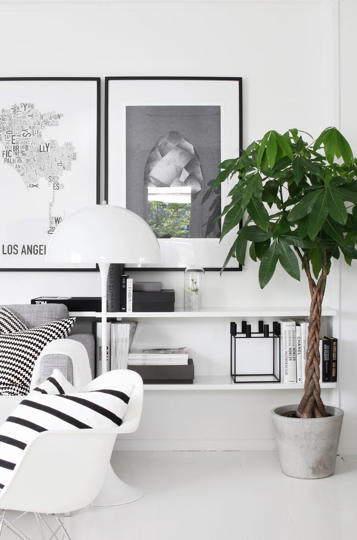 Leuke plant! Pachira! Stylizimo living room, Scandinavian style, black and white //admired by http://www.truelatvia.com