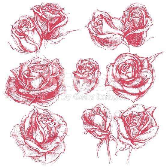 Roses Drawing set 001 royalty-free stock vector art