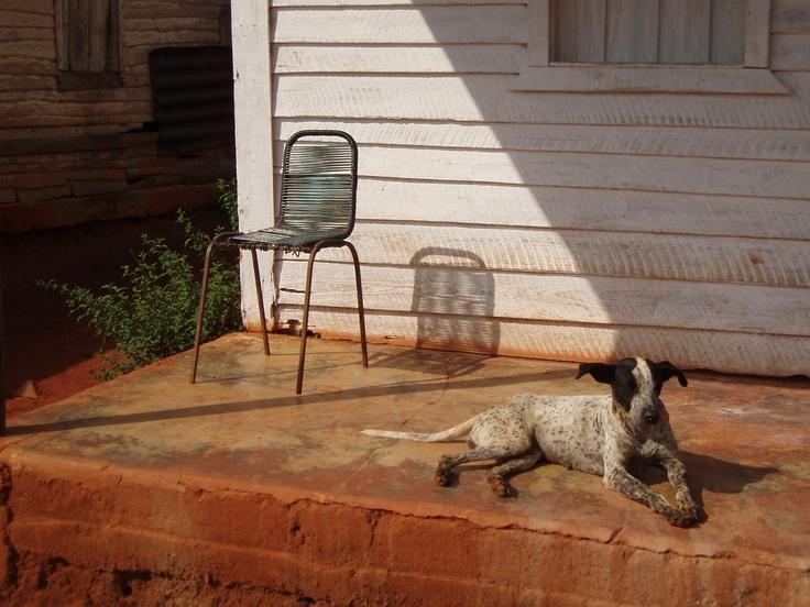 Dog sunning itself in Cuba