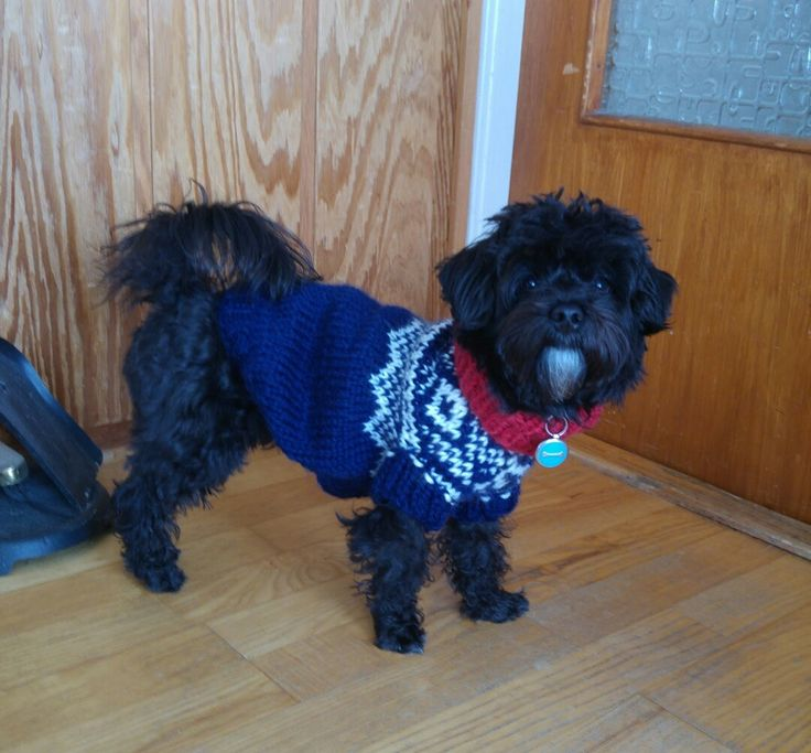 "Here's the traditional norwegian Marius-sweater I knitted for my dog, using the norwegian book called ""Marius strikkebok""."