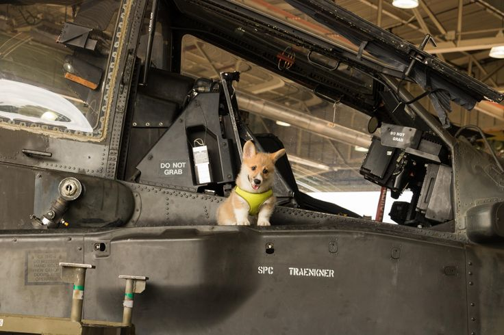 [OC] Corgi on an Apache attack helicopter http://ift.tt/2sbbqE9