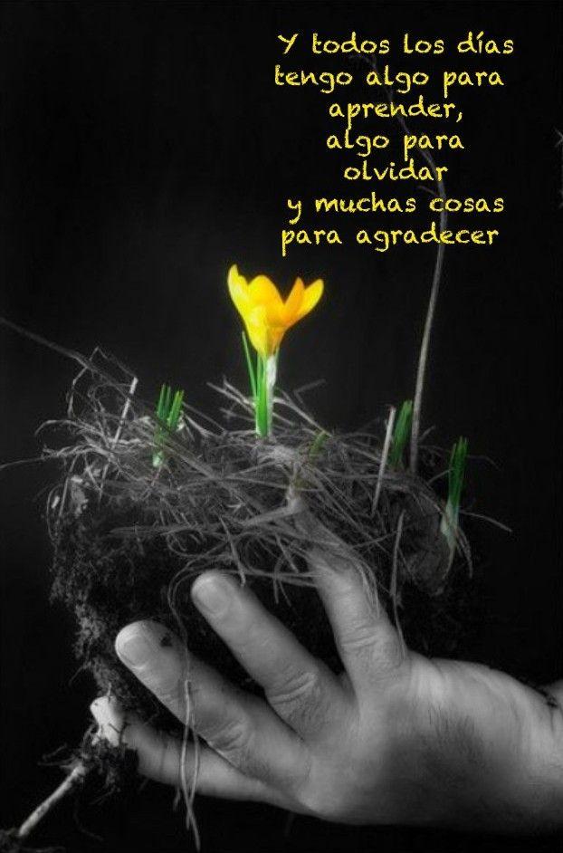 Gracias X Un Dia Mas Frases Motivadoras Frases Para