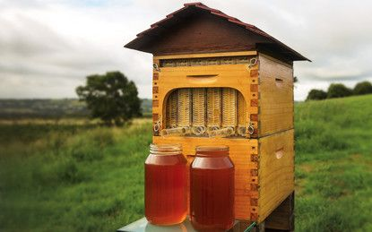 """Flow™ Hive Shop. I want to order the """"complete Full Flow Hive. -CAB"""
