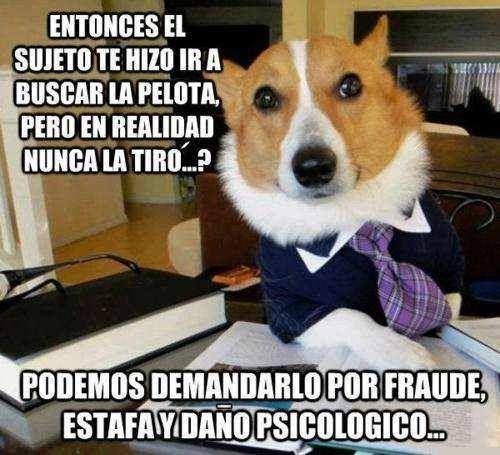 ¿Perros abogados? Estamos jodidos...